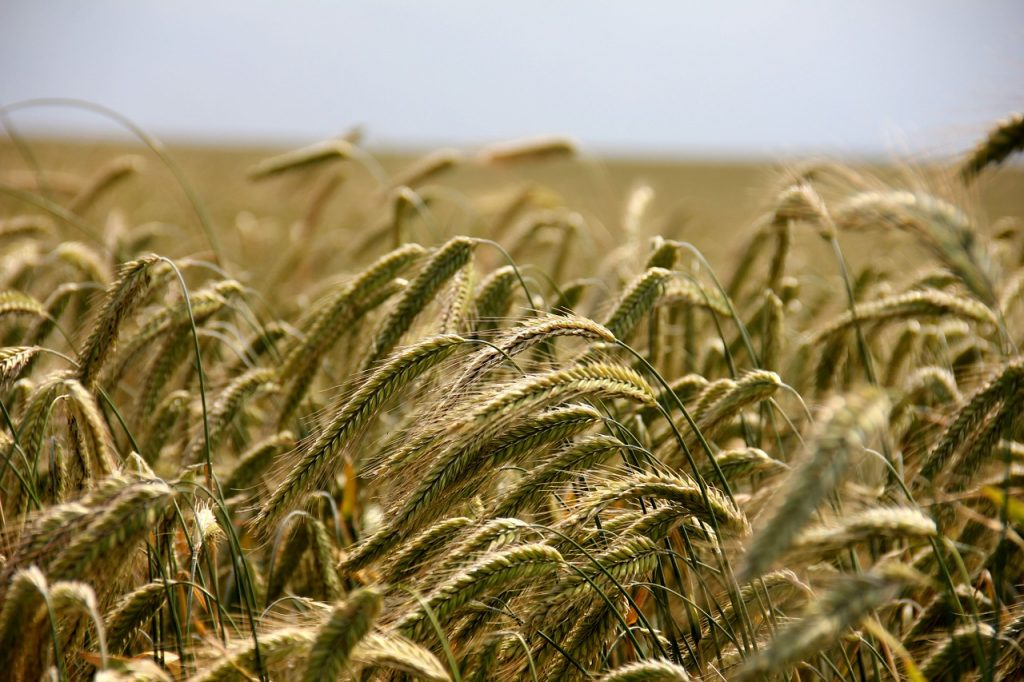 KSH: Agricultural Prices Continue to Drop post's picture