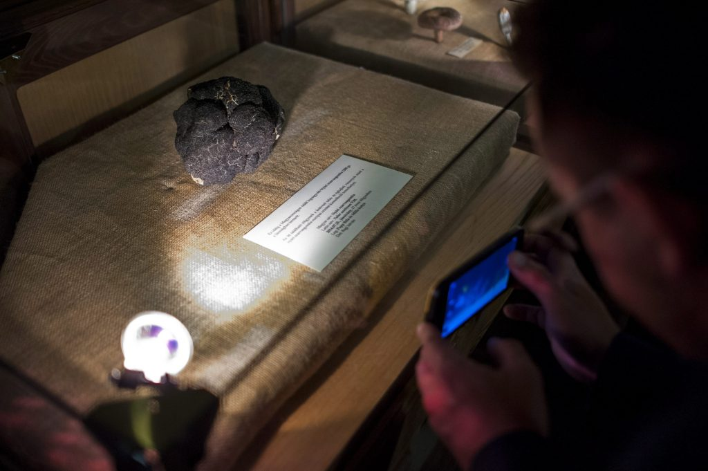 Tremendous Truffle Put in Museum post's picture