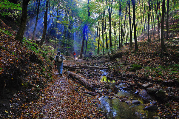 An Escape From The Rat Race: Ecotourism In Hungary post's picture