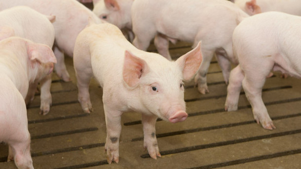 Farm Ministry: Hungary Breaks Into China's Meat Market post's picture