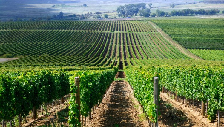 Bloomberg Lists Tokaj Among The World's Next Big Wine Regions post's picture