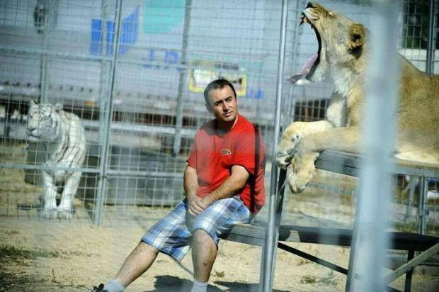 Visitors Evacuated From Leisure Park After Lions Escape From Cages post's picture
