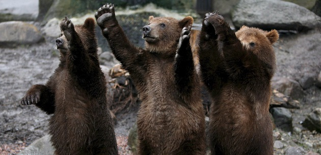 Globe-Trotting Brown Bear Roaming Hungarian National Park, Tracking Device Reveals post's picture