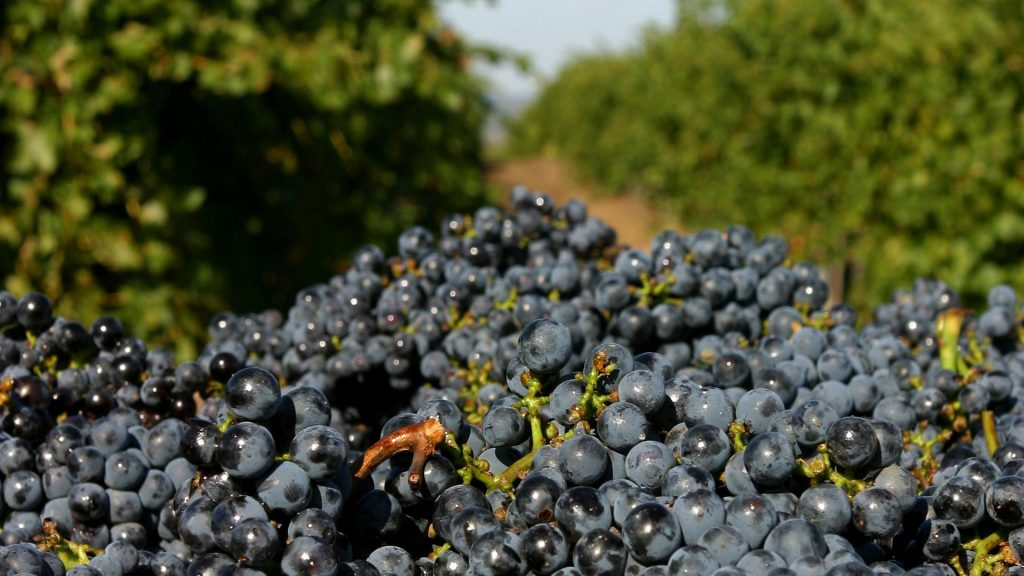Hungarian Wine Regions: Eger And The Legend Of Bull's Blood post's picture