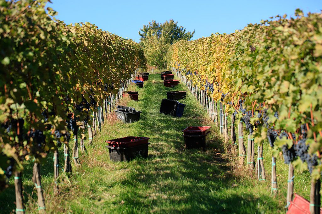 """Hungarian Wine Regions: Villány, Hungary's Mediterranean Corner And The """"Borderless City"""" Of Pécs post's picture"""