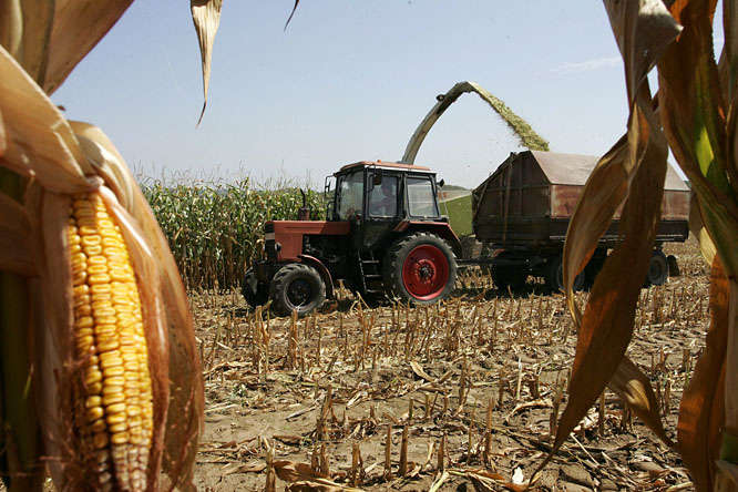 Hungary Urges European Commission To Ban Genetically Modified Maize Varieties post's picture
