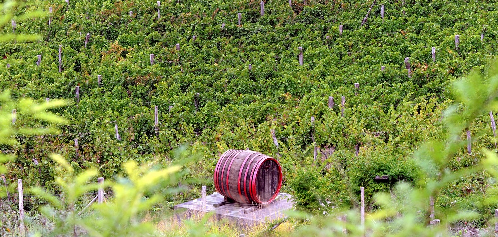 Business Daily: Hungarian Winemakers Generated €330 Million Revenue Last Year post's picture