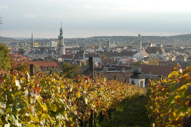 Hungarian Wine Regions: Sopron And Its Vigorous Blue Frankish post's picture