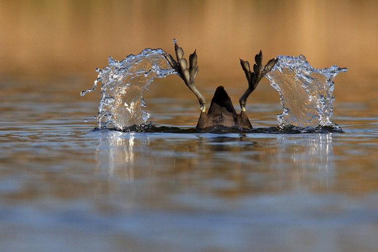 Five Award-Winning Pictures Taken By Hungarian Nature Photographers In 2015 post's picture