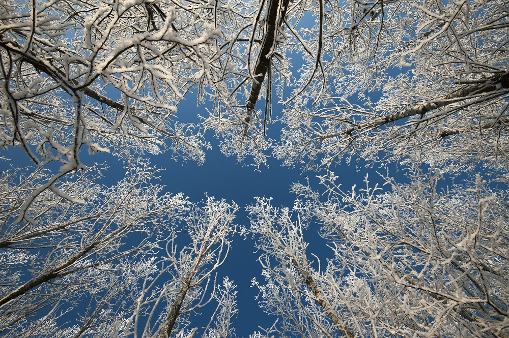 Frozen Hungary Covered With A Blanket Of Snow – Weather Photos! post's picture