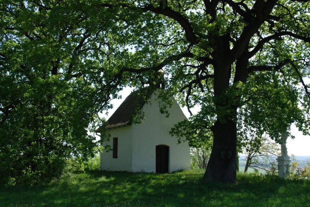 Magnificent Hungarian Oak Voted European Tree Of The Year With Huge Lead post's picture