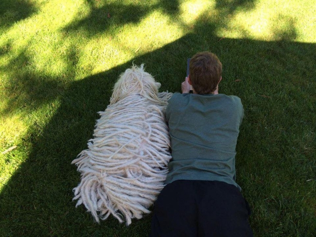 Who's The Star – Facebook Founder Zuckerberg Or His Hungarian Puli Dog? post's picture