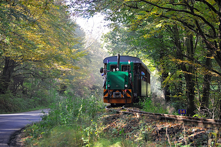 Hungary's Longest Narrow-Gauge Forest Railway Opens In The Börzsöny Hills post's picture