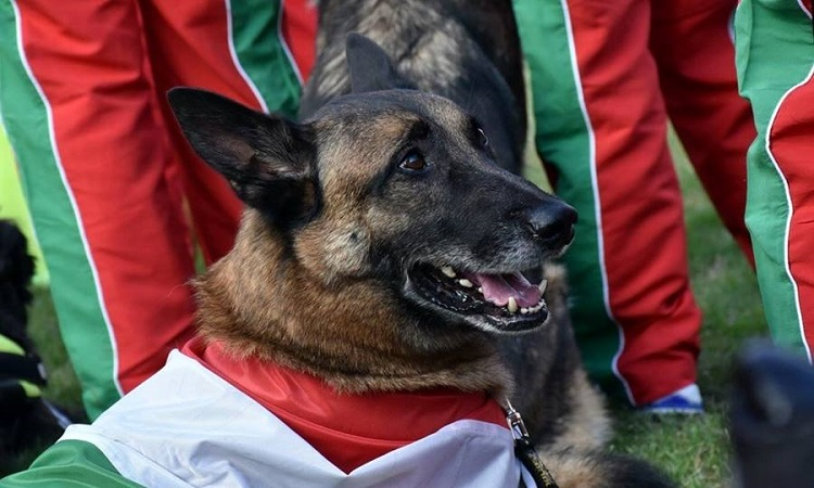 Great Hungarian Success On Rescue Dog's World Championship post's picture
