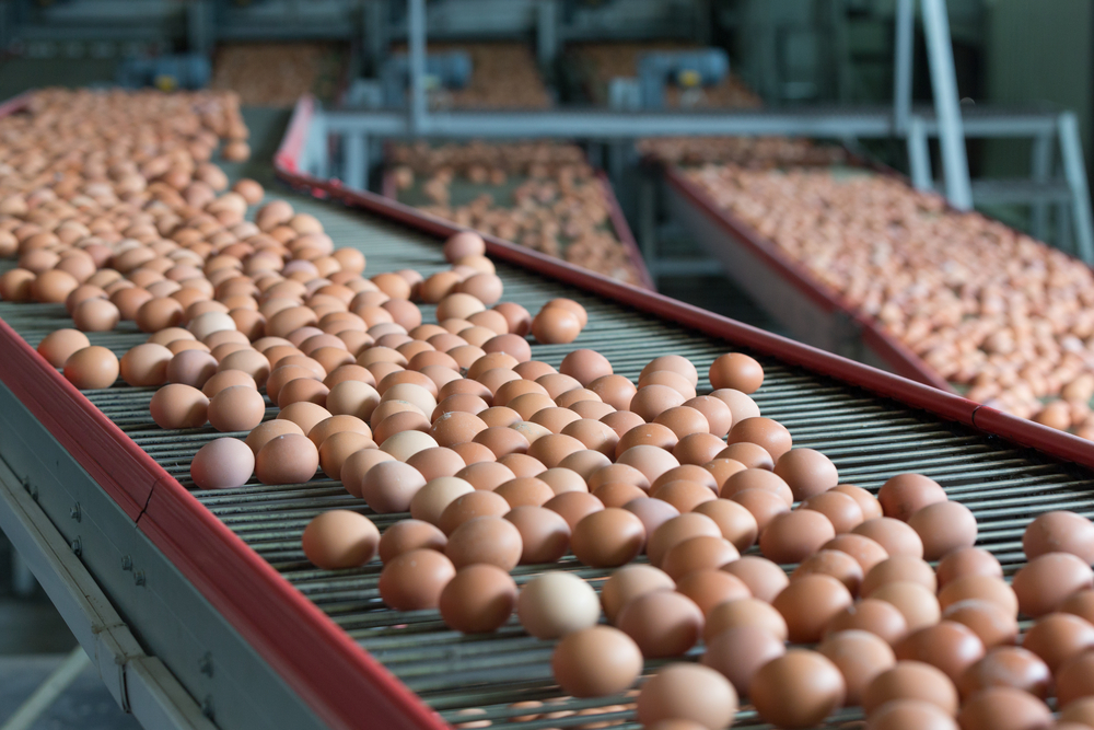 Food Authority Finds Hungarian-Produced Eggs Contaminated With Insecticide Fipronil post's picture