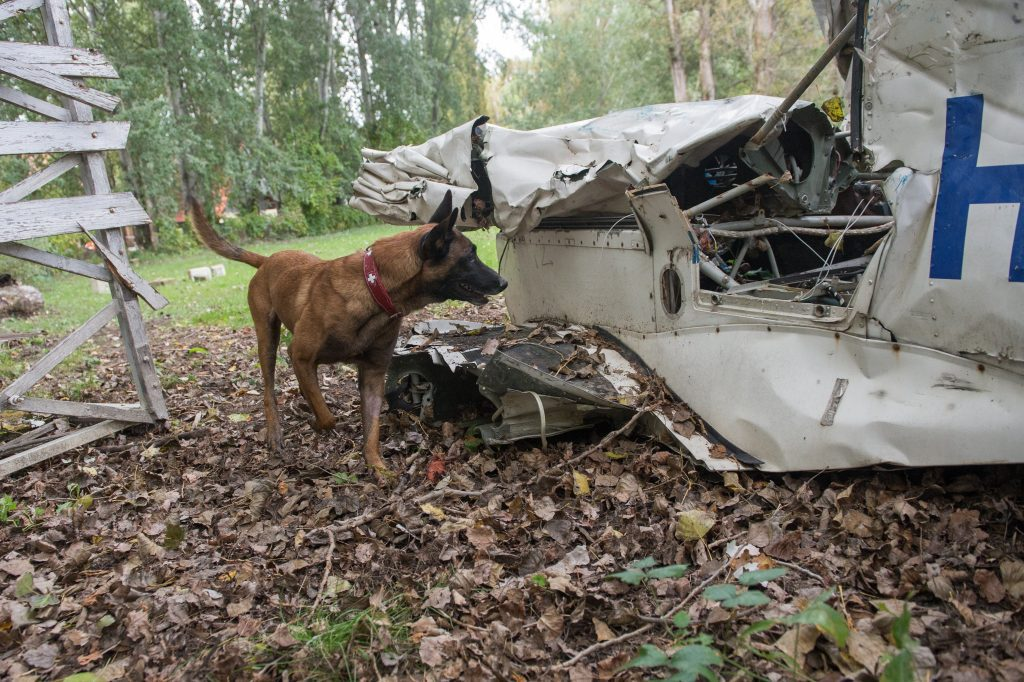 Hungary's Symba is One of the Best Rescue Dogs on Earth – Photo Gallery post's picture