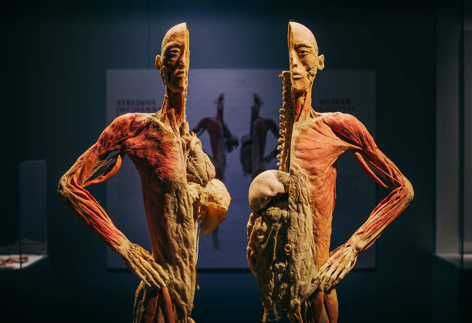 Controversial Body Exhibition to Open in Budapest in February post's picture