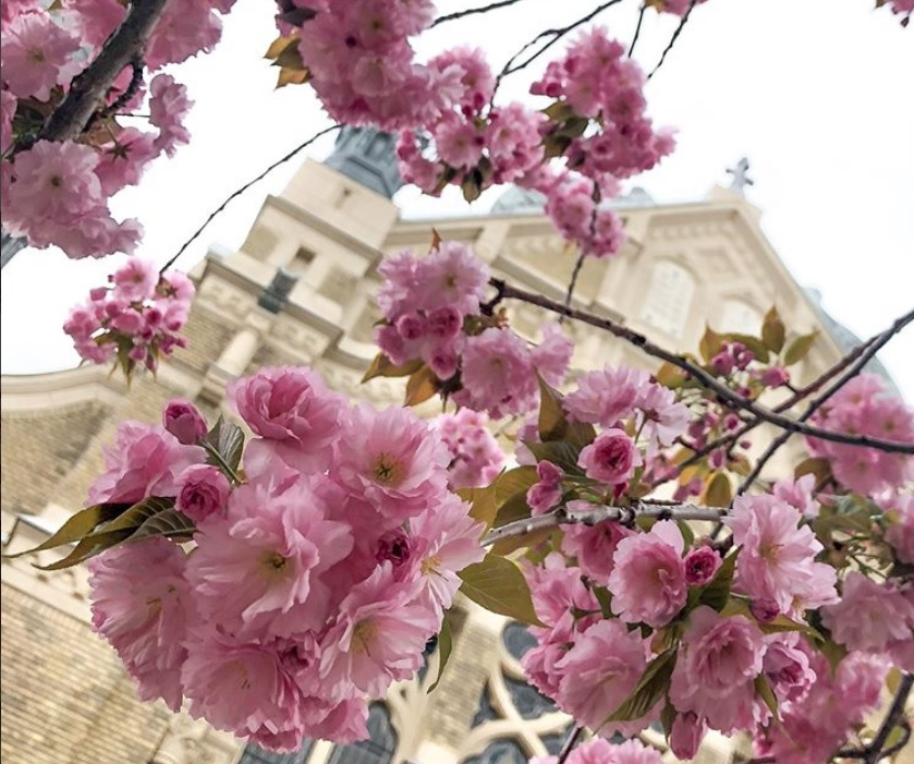 Szeged, the City of Sunshine – Hungary in Pictures post's picture