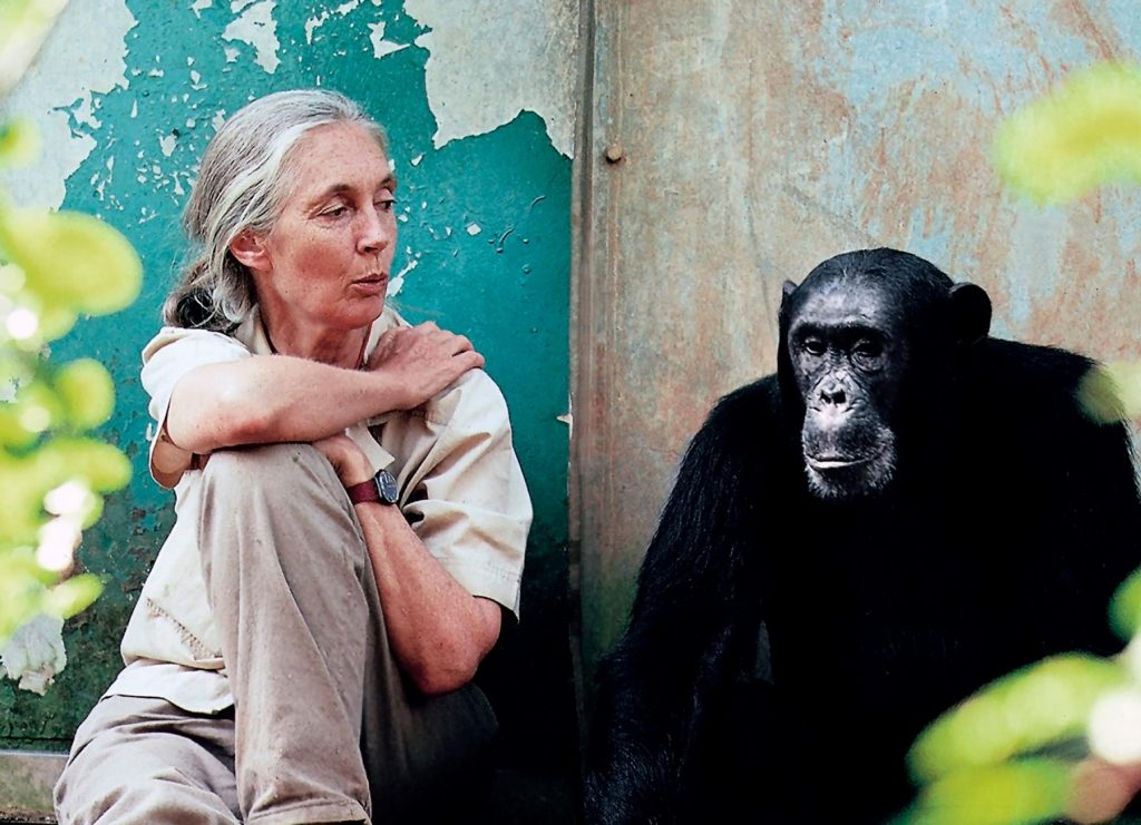 UN Messenger of Peace Jane Goodall to Visit Hungary post's picture