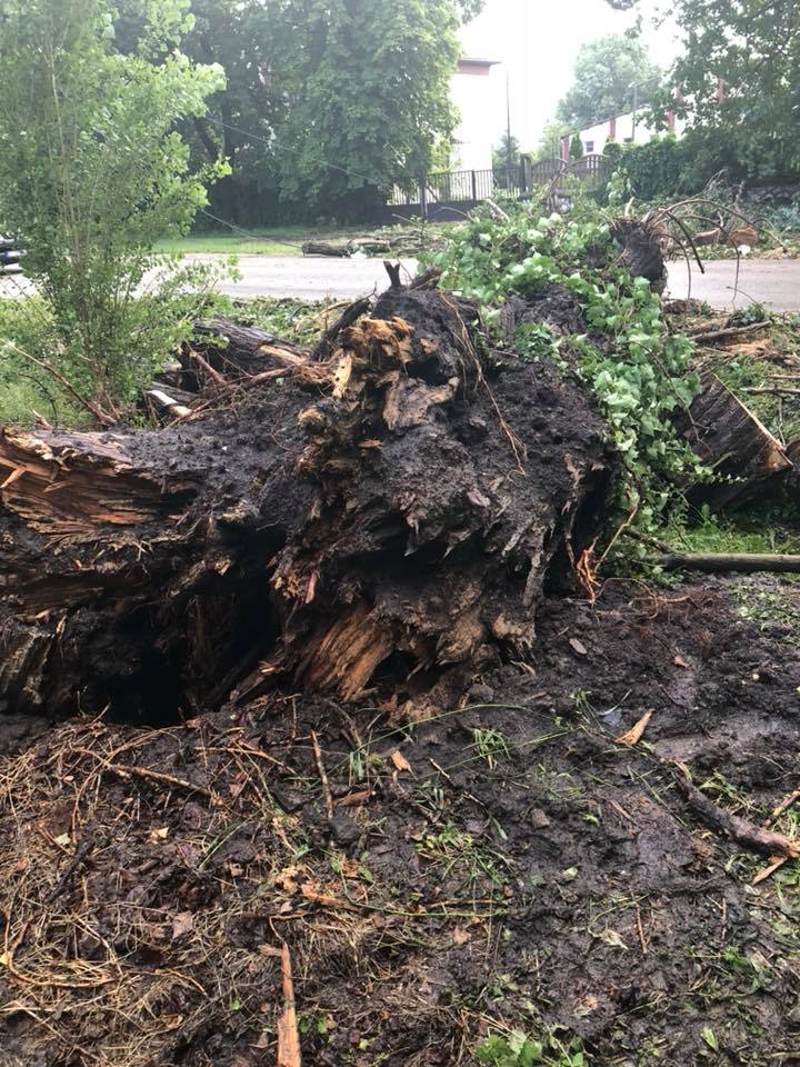 Four Die in Southern Hungary After Tree Crushes Car During Storm post's picture