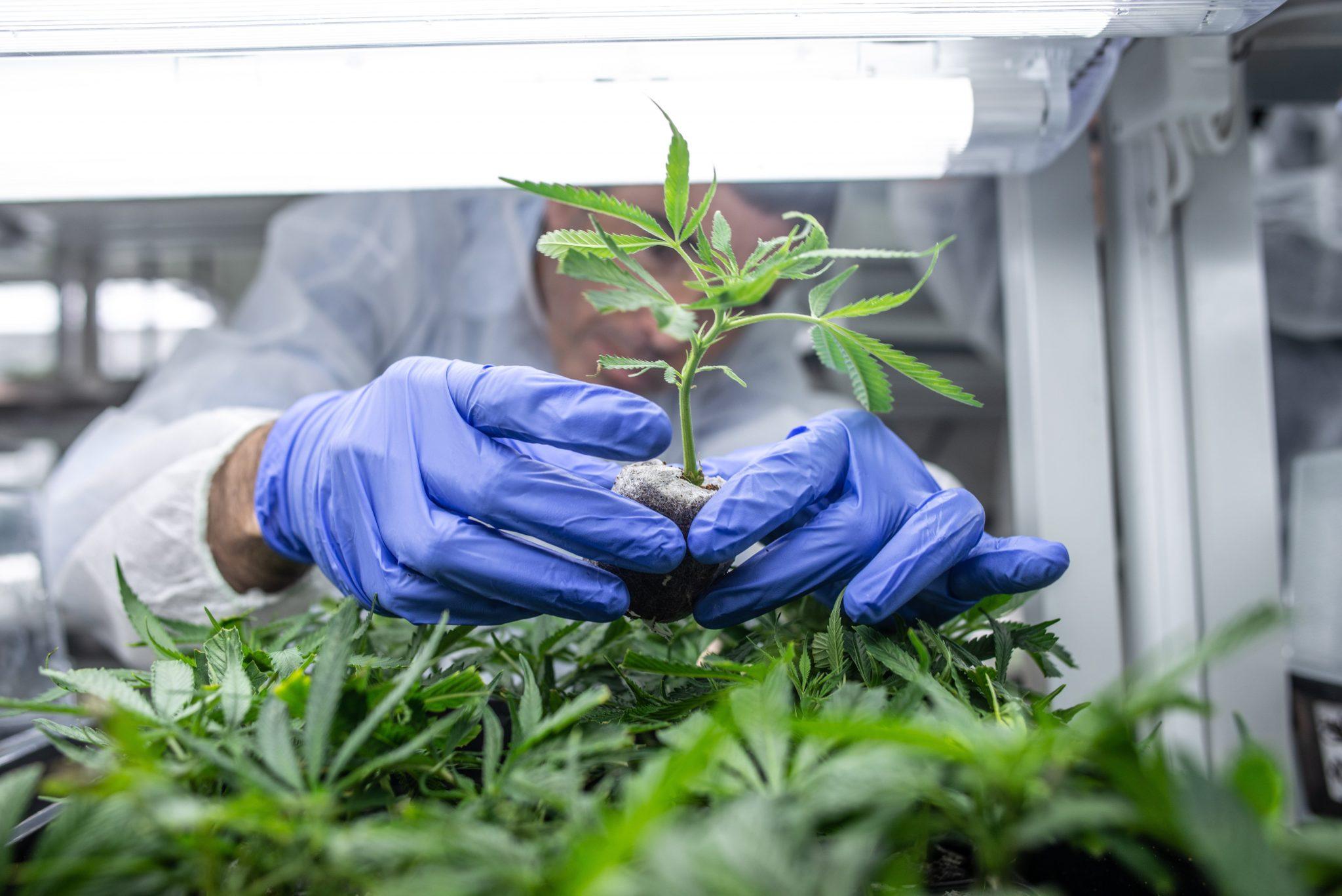 Gov't Still Opposes Medical Marijuana Despite European Tendencies