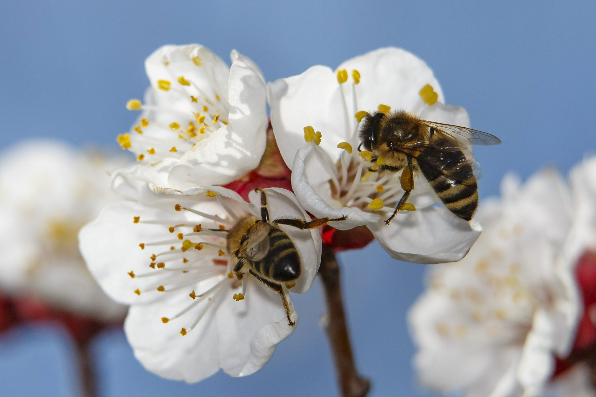 Hungary Collected over 15,000 Signatures for European Initiative to Save Bees