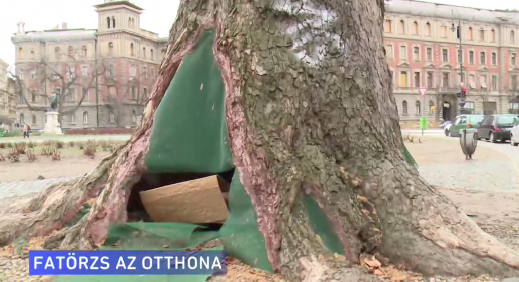 Homeless Man 'Moves into' a 150-Year-Old Sycamore Tree in Budapest post's picture