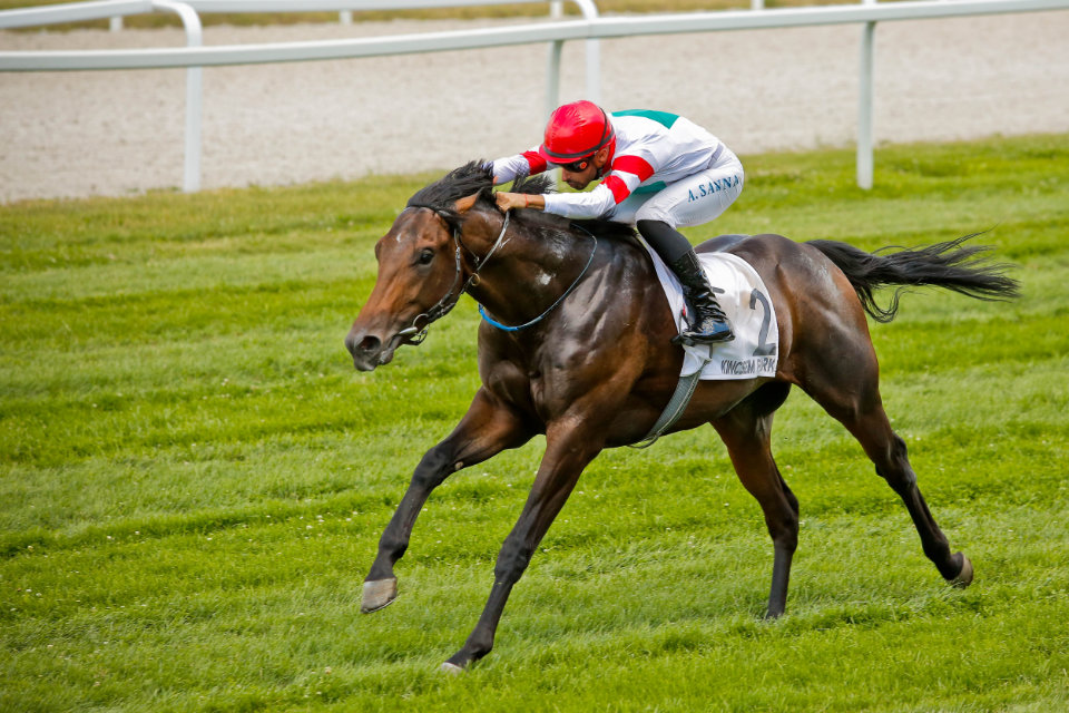 Tour to Paris: The New Hungarian Wonder Horse? post's picture