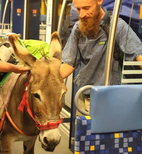 Special Passengers on the Hungarian Railway: a Donkey and a Goat – Video! post's picture