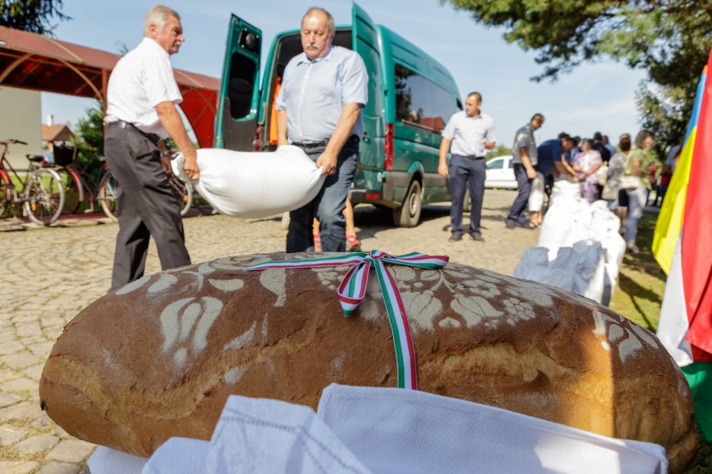 Bread of Hungarians: 400 Tonnes of Wheat Collected from the Carpathian Basin post's picture