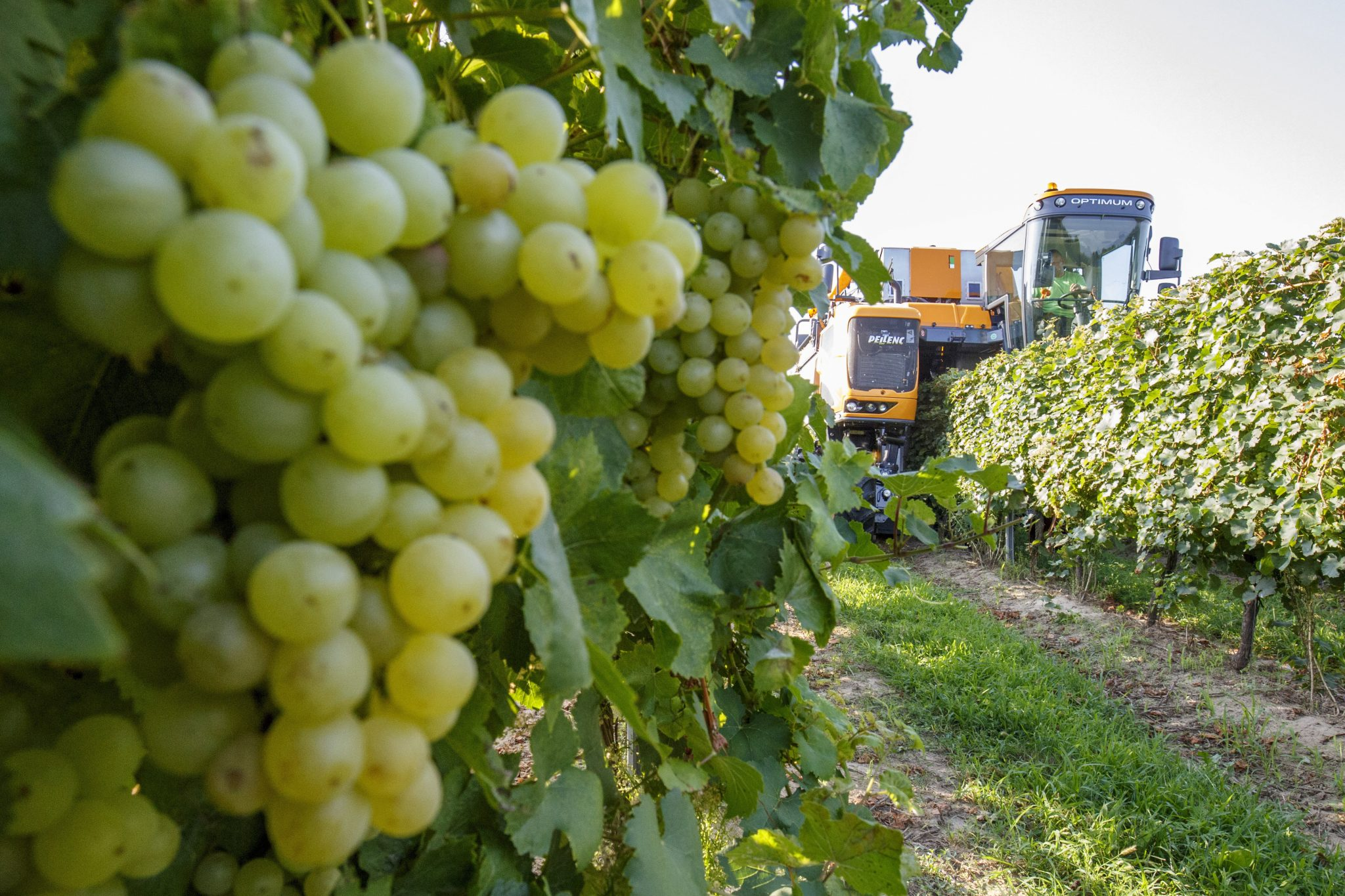 Hungary to Produce 3m Hectolitres of Wine in 2019 post's picture