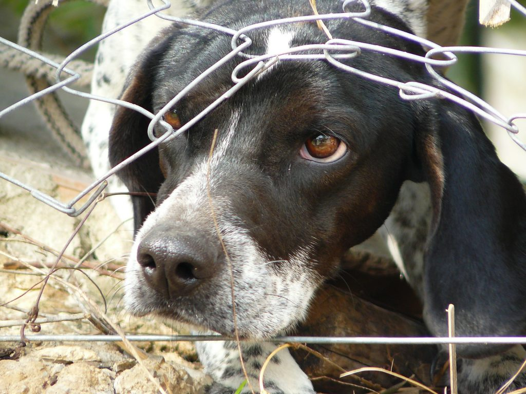 Brutal Animal Cruelty Cases Shock Hungary post's picture