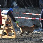 Hungarian Rescue Dog Wins First Place at World Championship