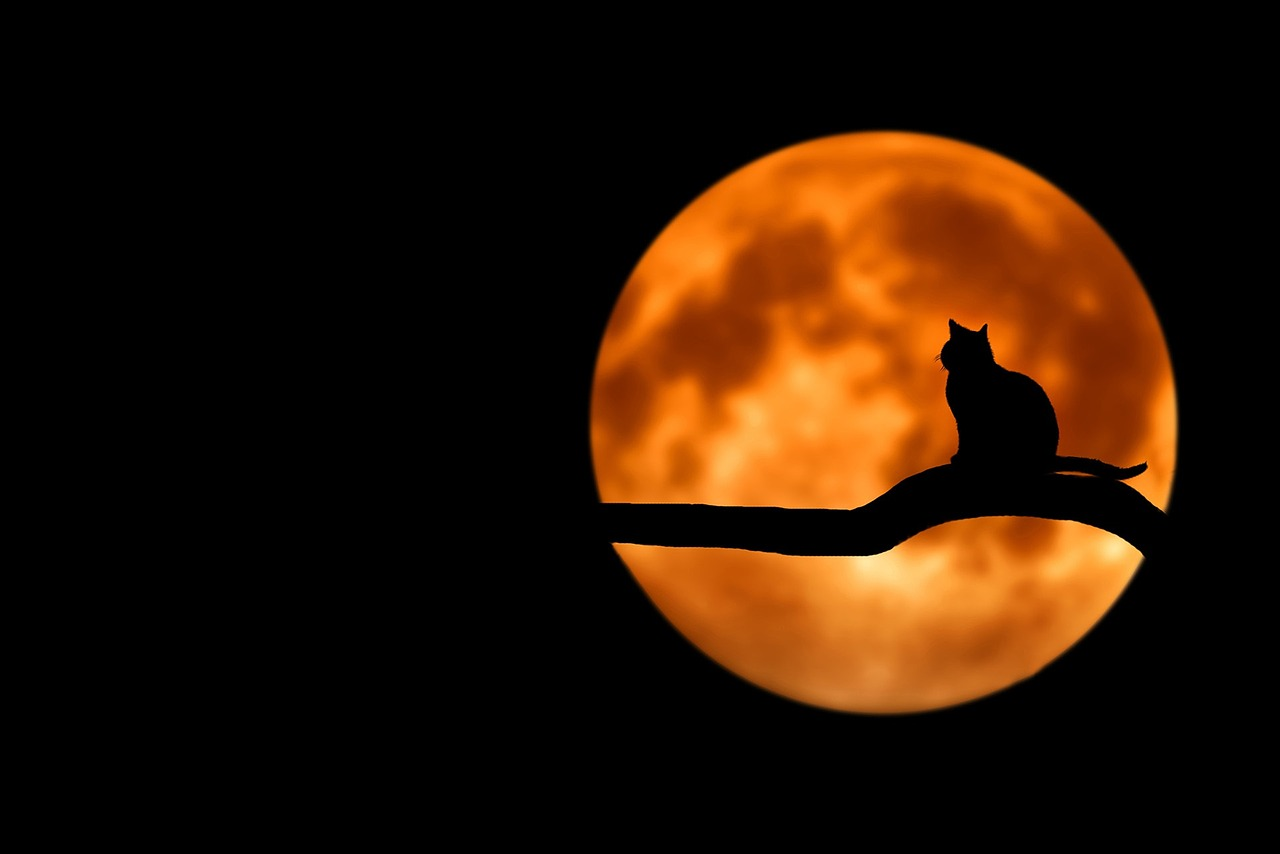 A harvest moon is coming on Friday the 13th, folks