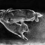 Hungarian Csaba Daróczi Wins Best Nature Photographer of Year