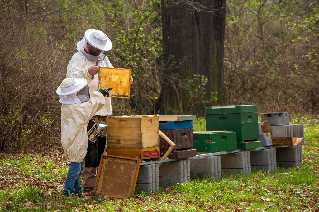 Govt to Boost Support for Beekeepers by 25 percent post's picture