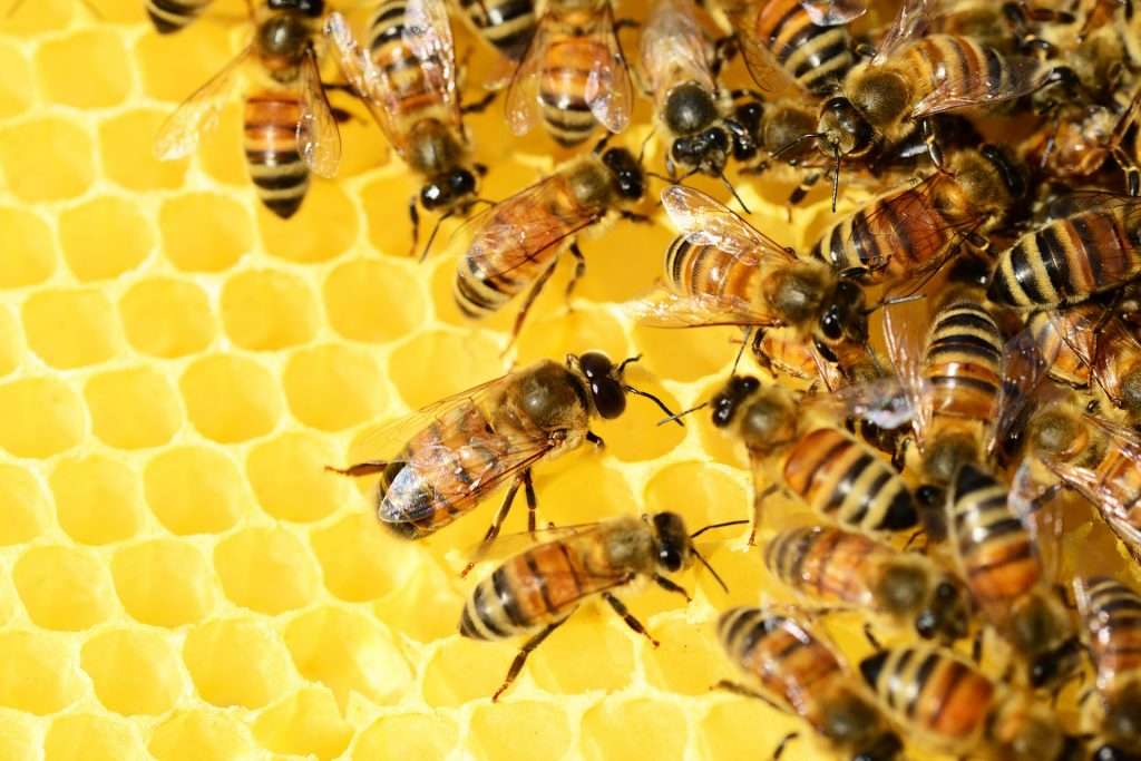 Beekeepers Need European Support and Cooperation, says Agriculture Minister post's picture
