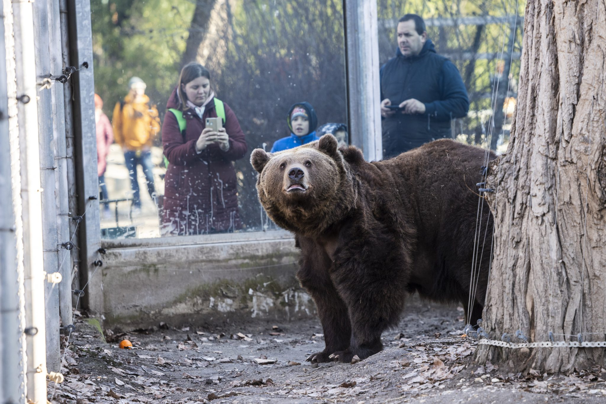 "Balu Bear of Budapest Zoo ""Predicts"" Long Winter post's picture"