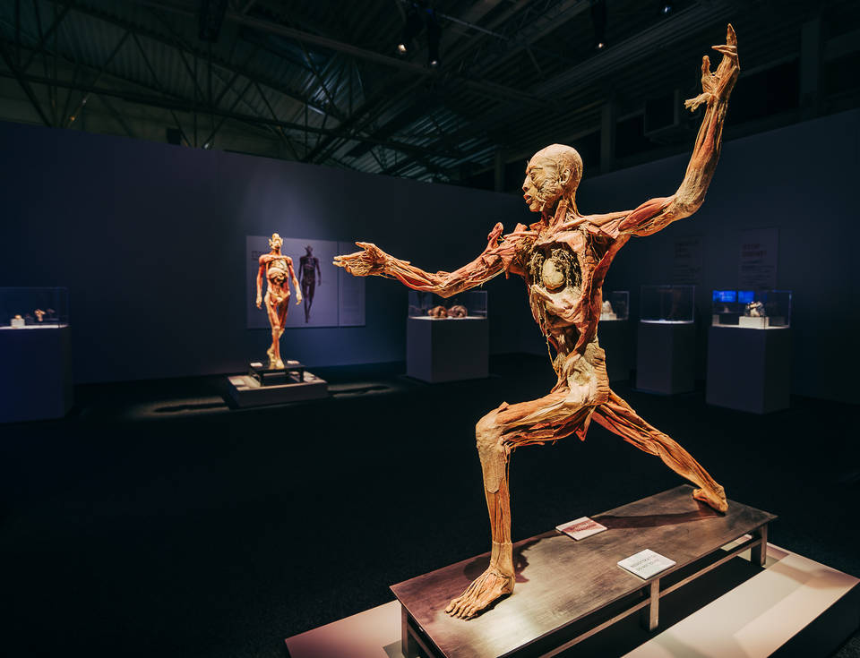 Body Exhibition Back in Budapest This February post's picture