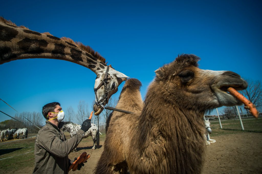 Hungary's Only Car Safari Park to Close Its Doors but Looking for New Home post's picture
