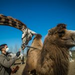 Hungary's Only Car Safari Park to Close Its Doors but Looking for New Home