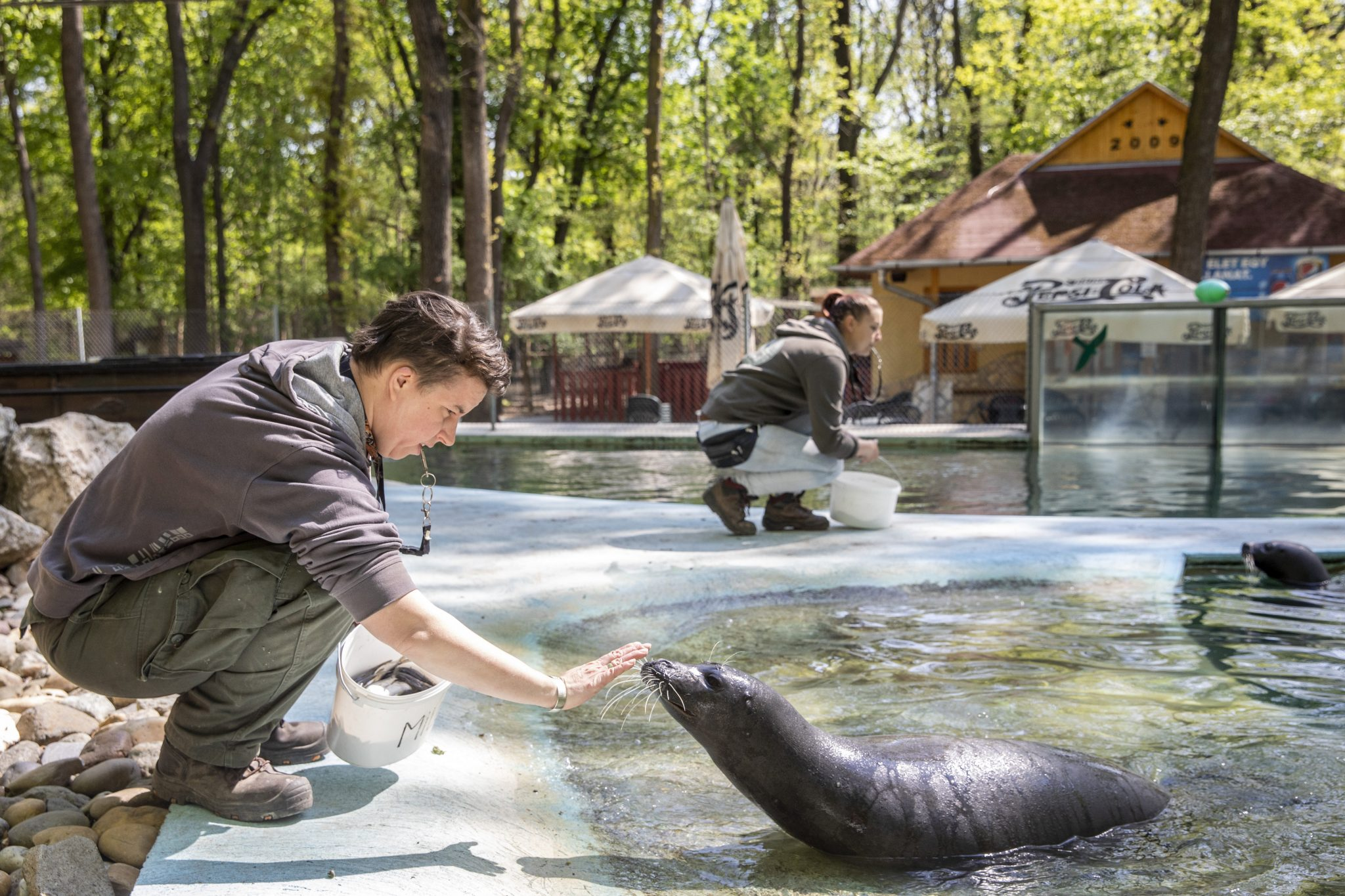 Coronavirus: Hungarian Zoos Fighting for Survival, Ask for Help to Feed and Care for Animals post's picture