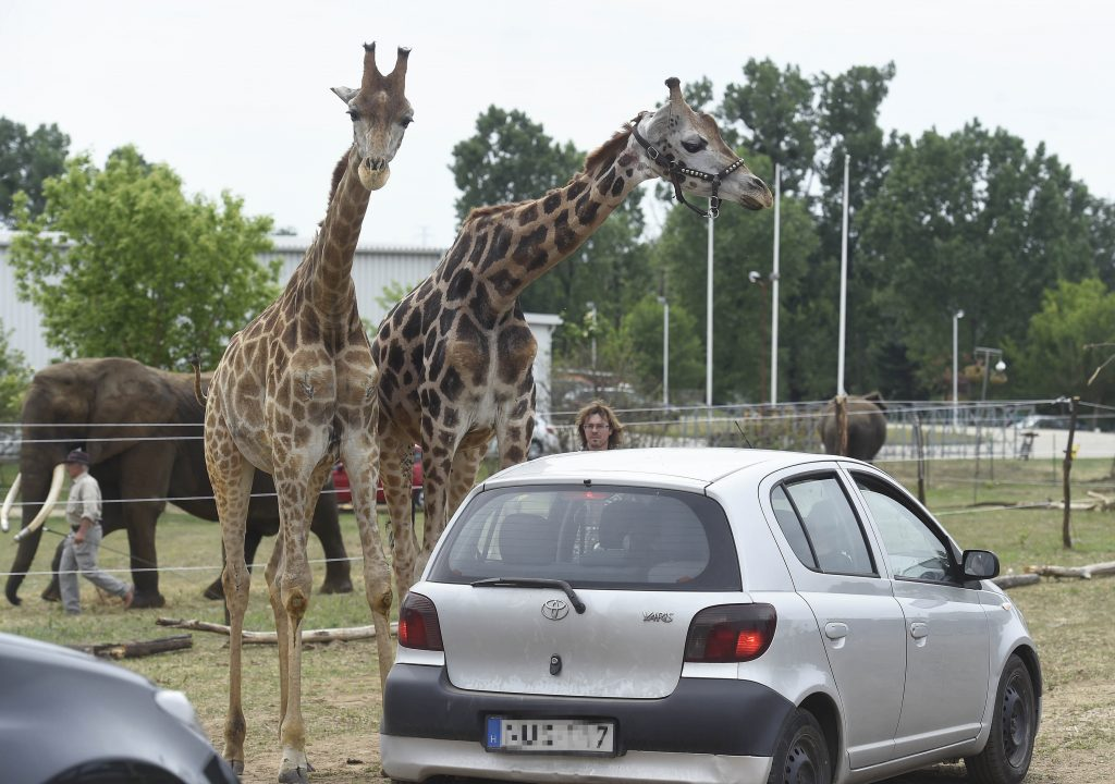 Hungary's First Safari Park Opens Near Budapest post's picture