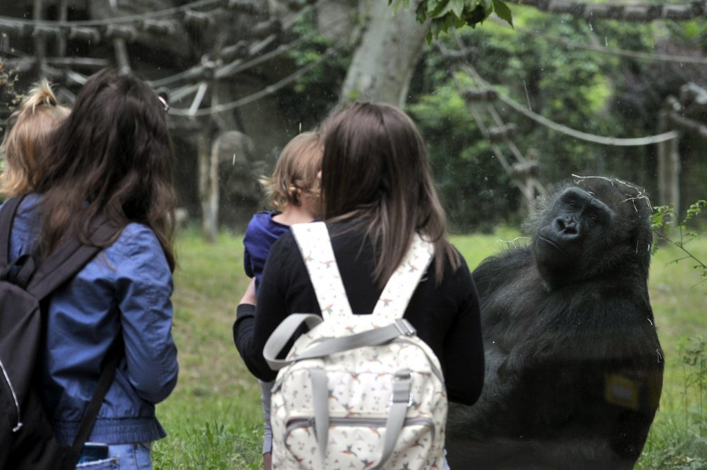 Budapest Zoo Joins EC Biodiversity Initiative post's picture