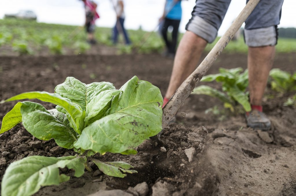 Organic Agriculture on the Rise in Hungary post's picture