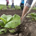 Organic Agriculture on the Rise in Hungary