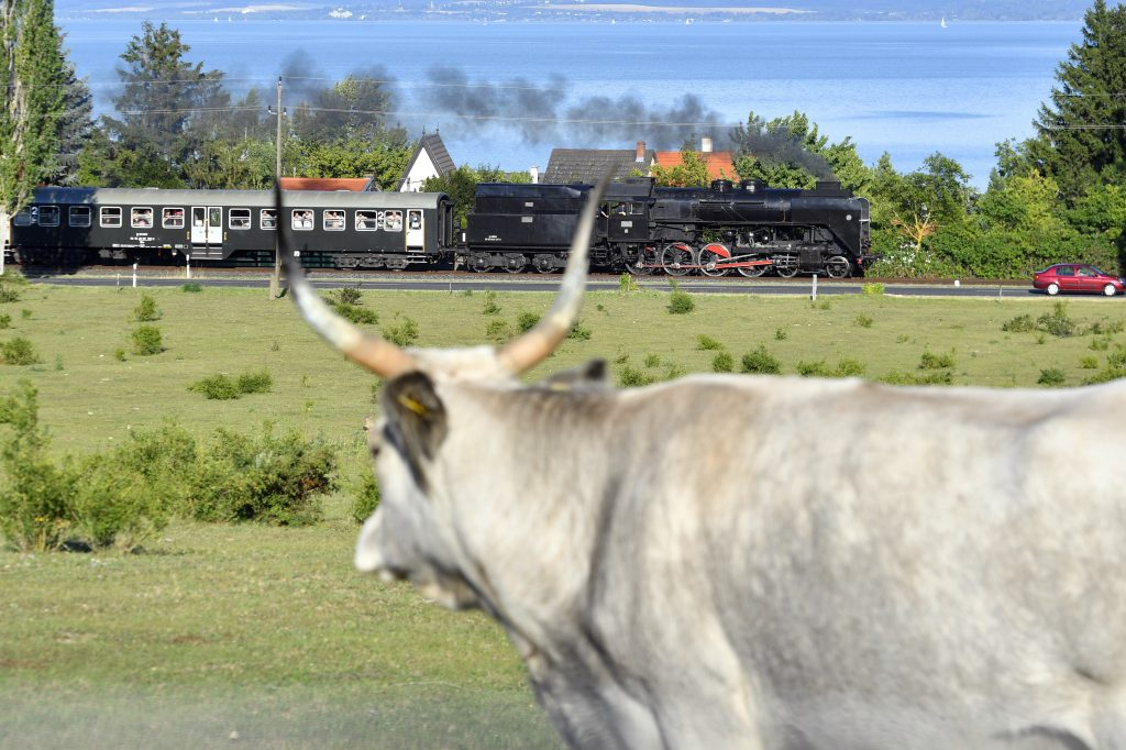 Retro Locomotive Weekend at Lake Balaton – Photo Gallery! post's picture