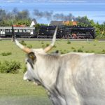 Retro Locomotive Weekend at Lake Balaton – Photo Gallery!