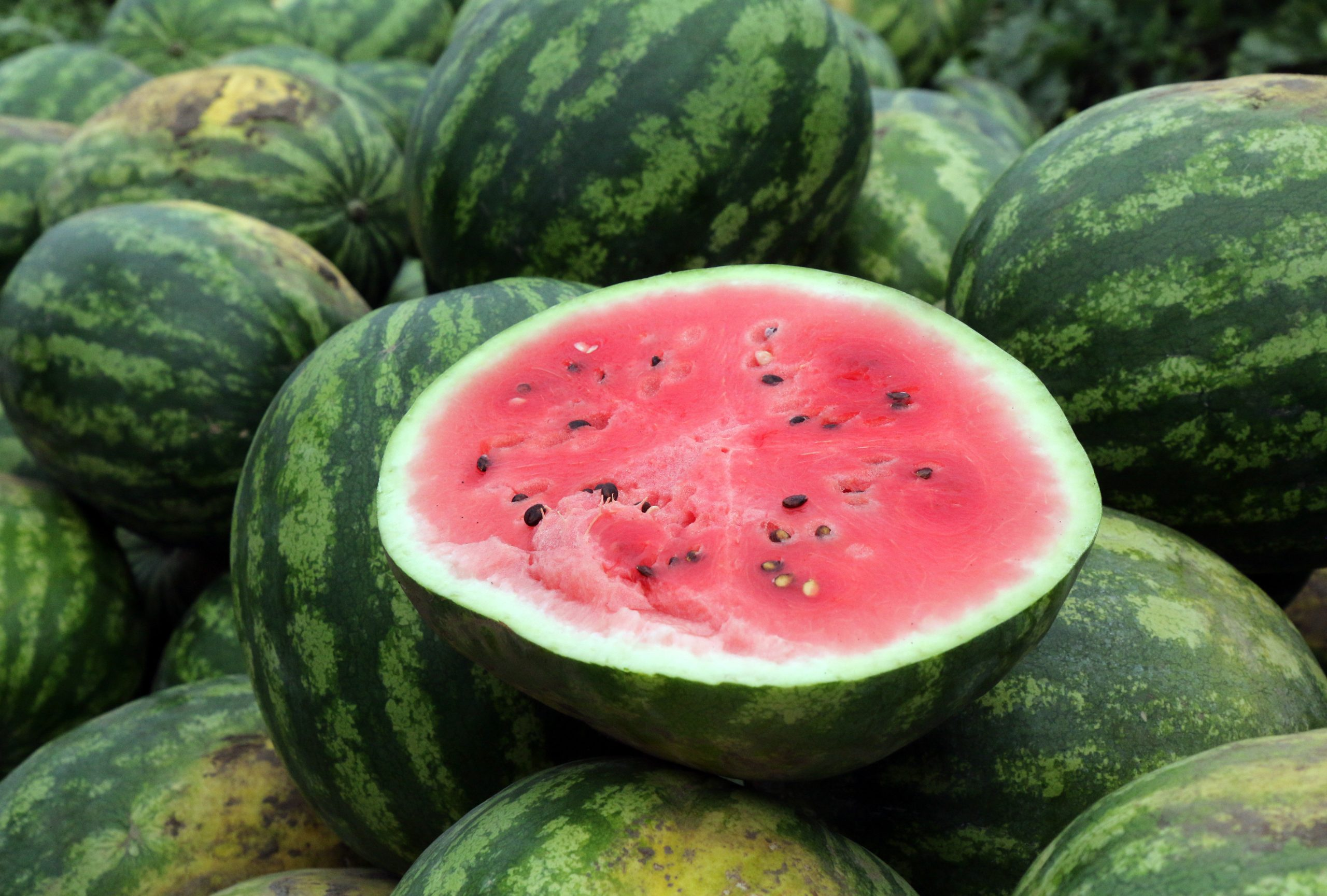 Fruitful Year for Watermelon in Hungary post's picture