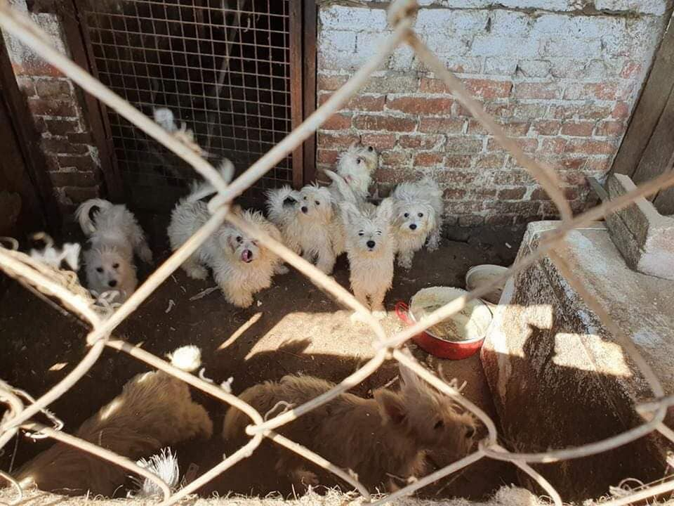 Total of 148 Dogs Rescued in Terrible Conditions from Illegal Breeding Farm post's picture